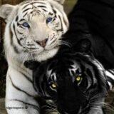 Amizade colorida