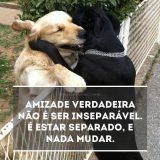 Web Amigos